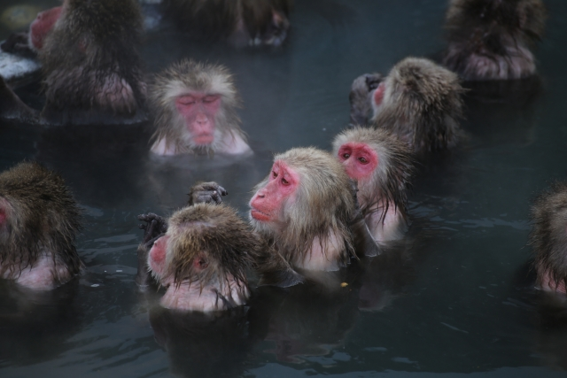 ひらゆの森は私の中では日本一の温泉地!-h2